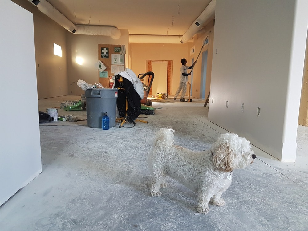 A small white dog walking around a house being remodeled
